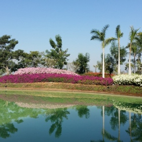 This is a partial view of the lake and the special-events garden as seen from Bamboo, special events pavilion. Multi-colored bougainvillea and date palms predominate. Jardines de México.